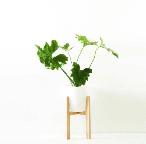 Maceta XL con pie de madera bajo