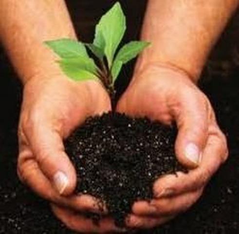 Tierra Compost- bolsa chica